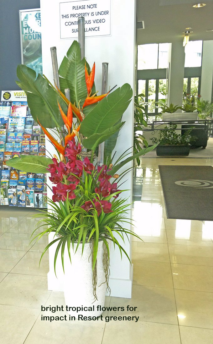 """Tropical Resort Feel""- adding vibrant colours with artificial plants..."