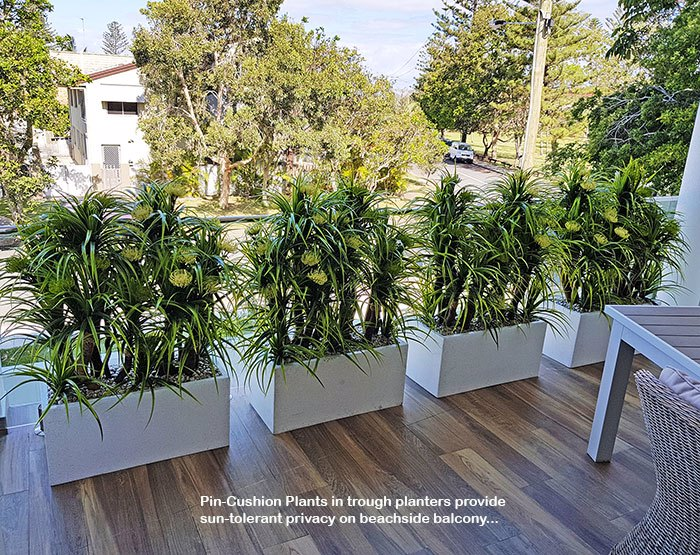 Privacy planters screen balcony...