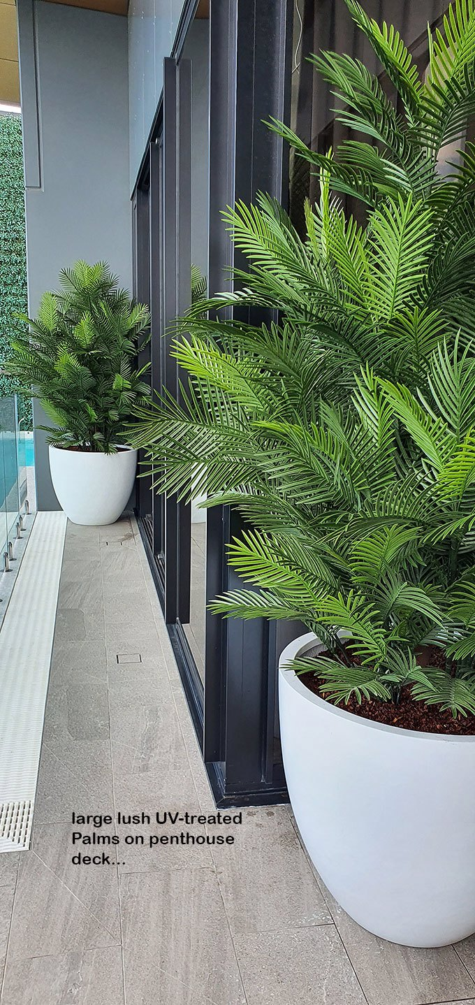 large, lush UV-treated Palms for penthouse balcony...