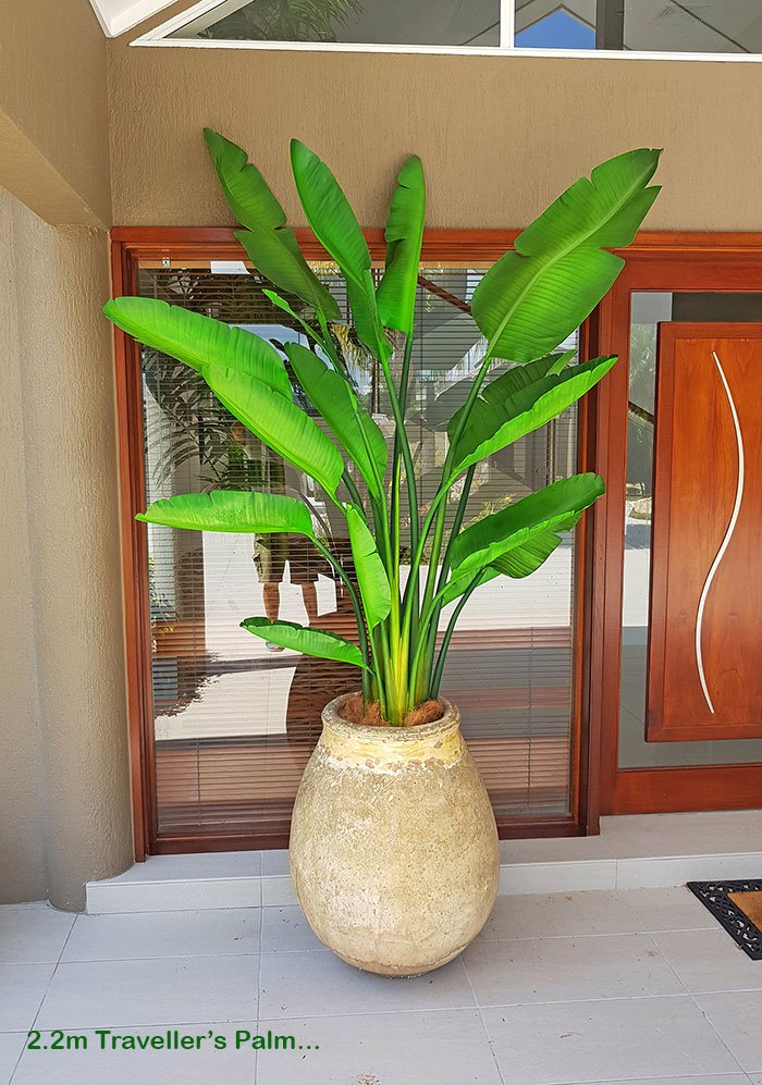 Traveller's Palms make a statement at entry...