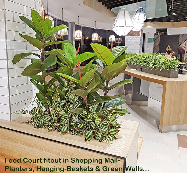 'Greening-up' a Food Court in shopping centre...