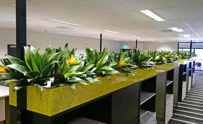 office planter. planterbox settings long planters office planter f