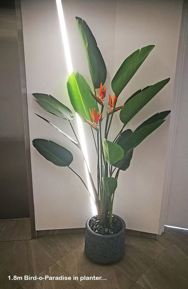 Plants for appartment foyers
