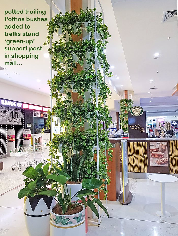 Greenery Trellis in mall freshens-up food court...