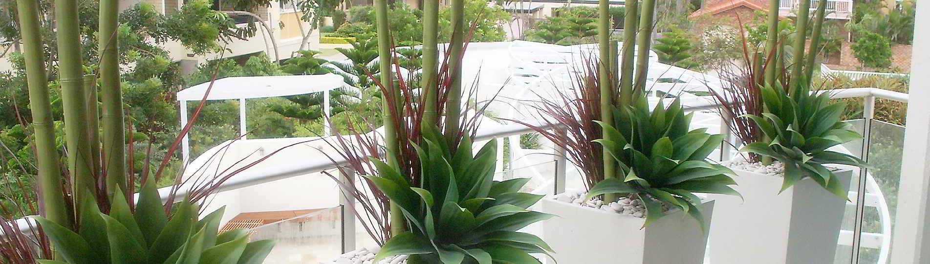 Indoor | Outdoor Artificial Plants & Tress - Gold Coast Interior Gardens