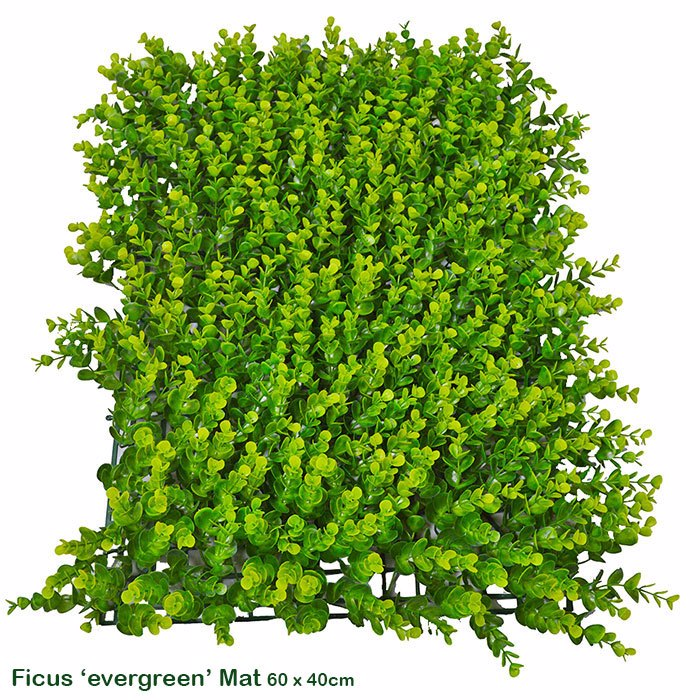 Wall-Panels Ficus 'evergreen'