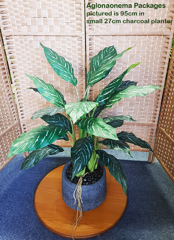 Articial Plants - Packages- Aglaonema .95m in planter
