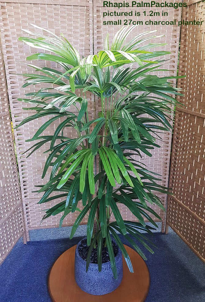 Packages- Rhapis Palm 1.2m in planter