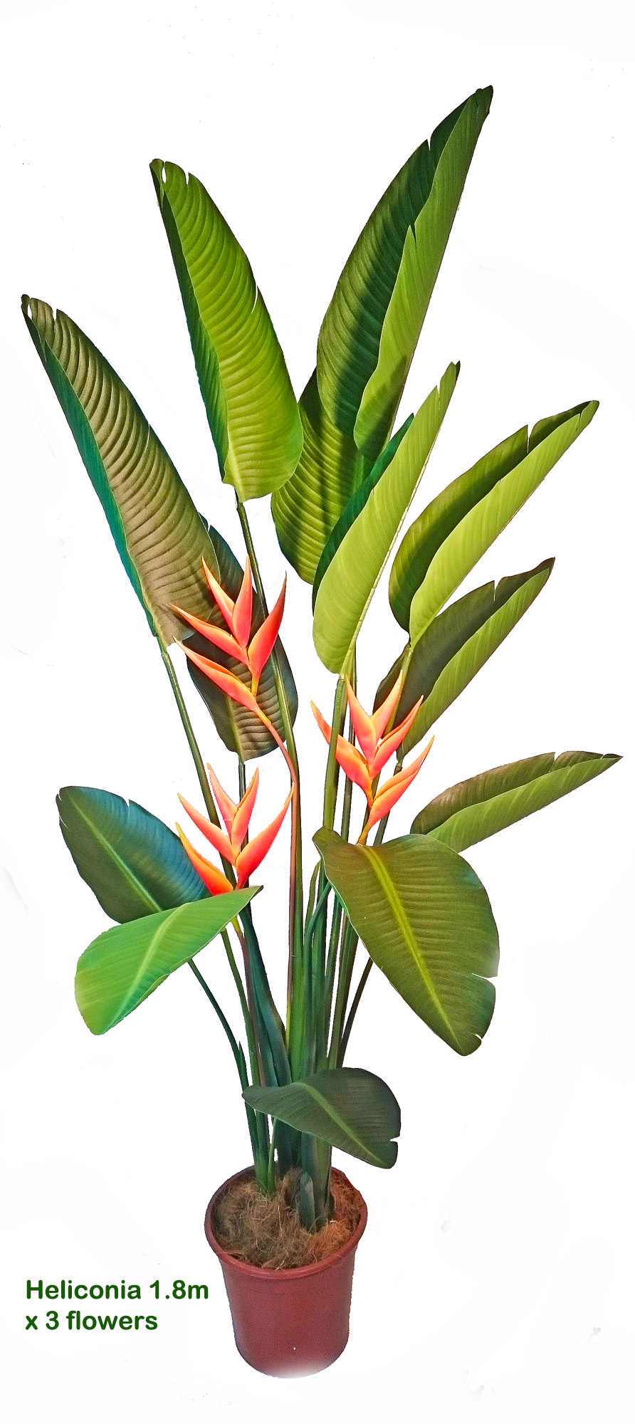 Articial Plants - Heliconia Palms- Flowering 1.6m with 2 flowers