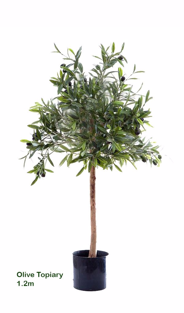 Olive Topiary 1.2m