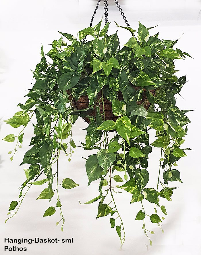 Articial Plants - Hanging Baskets- Pothos {small}