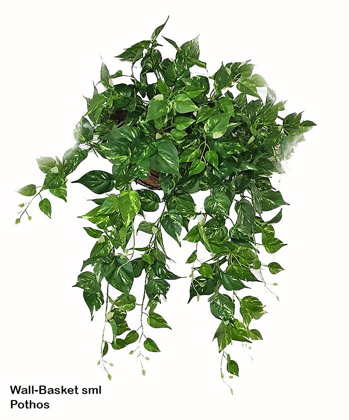 Articial Plants - Wall-Baskets Pothos-medium