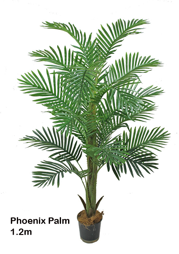 Articial Plants - Phoenix Palm 1.7m delux