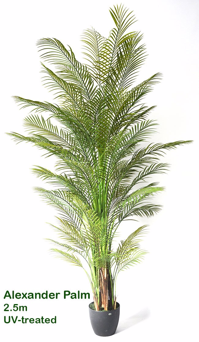 Articial Plants - Alexander Palm 2.4m UV-treated