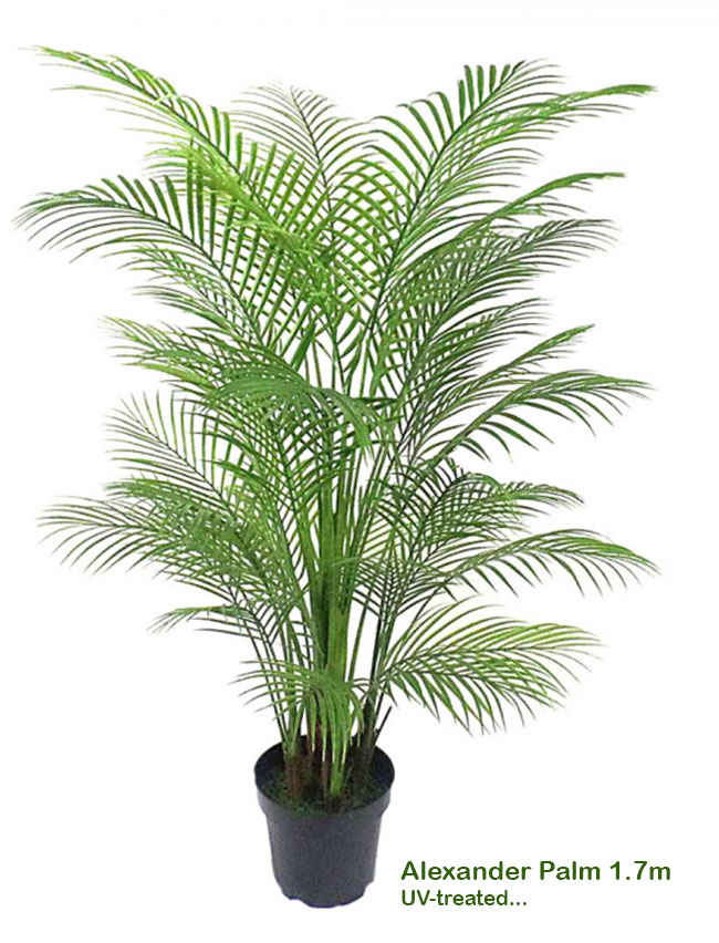 Articial Plants - Alexander Palm 1.7m UV-treated