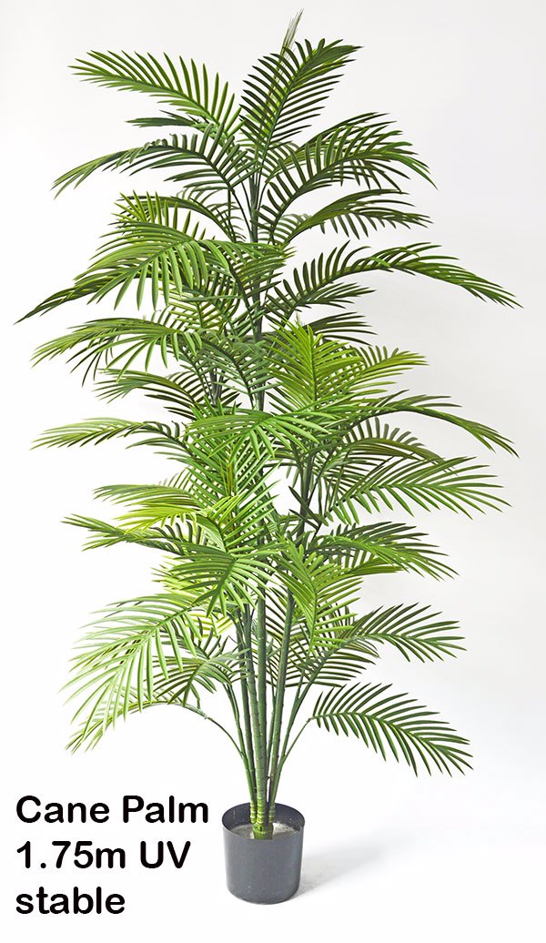 Articial Plants - Cane Palm 1.8m delux UV stable