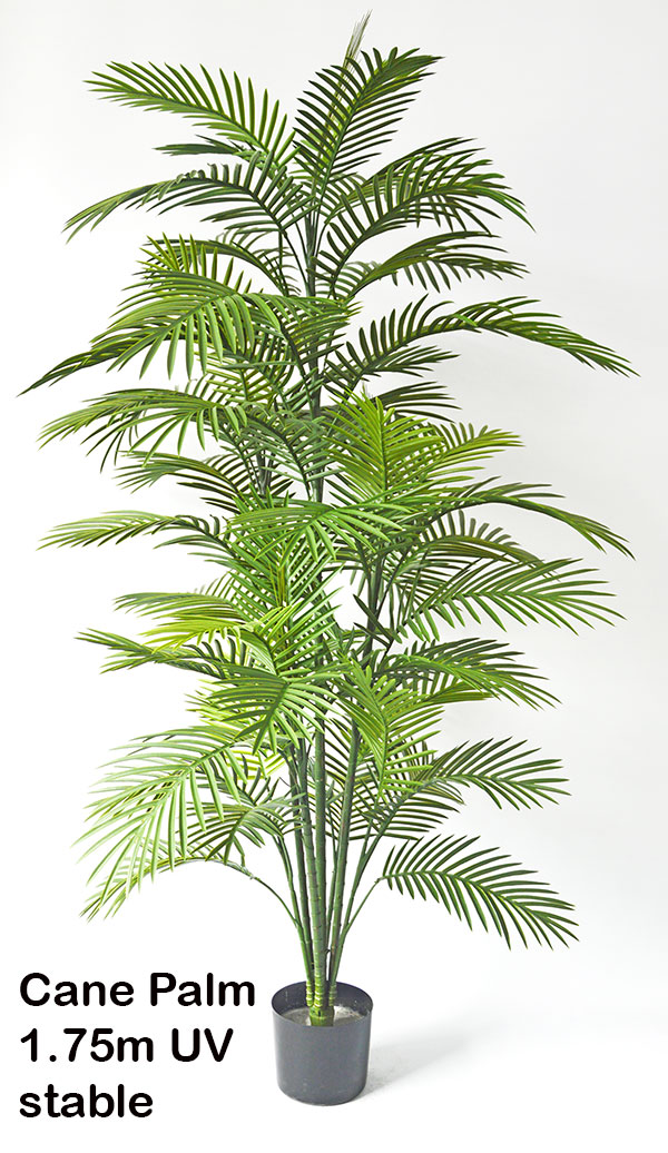 Articial Plants - Cane Palm 1.6m delux UV stable