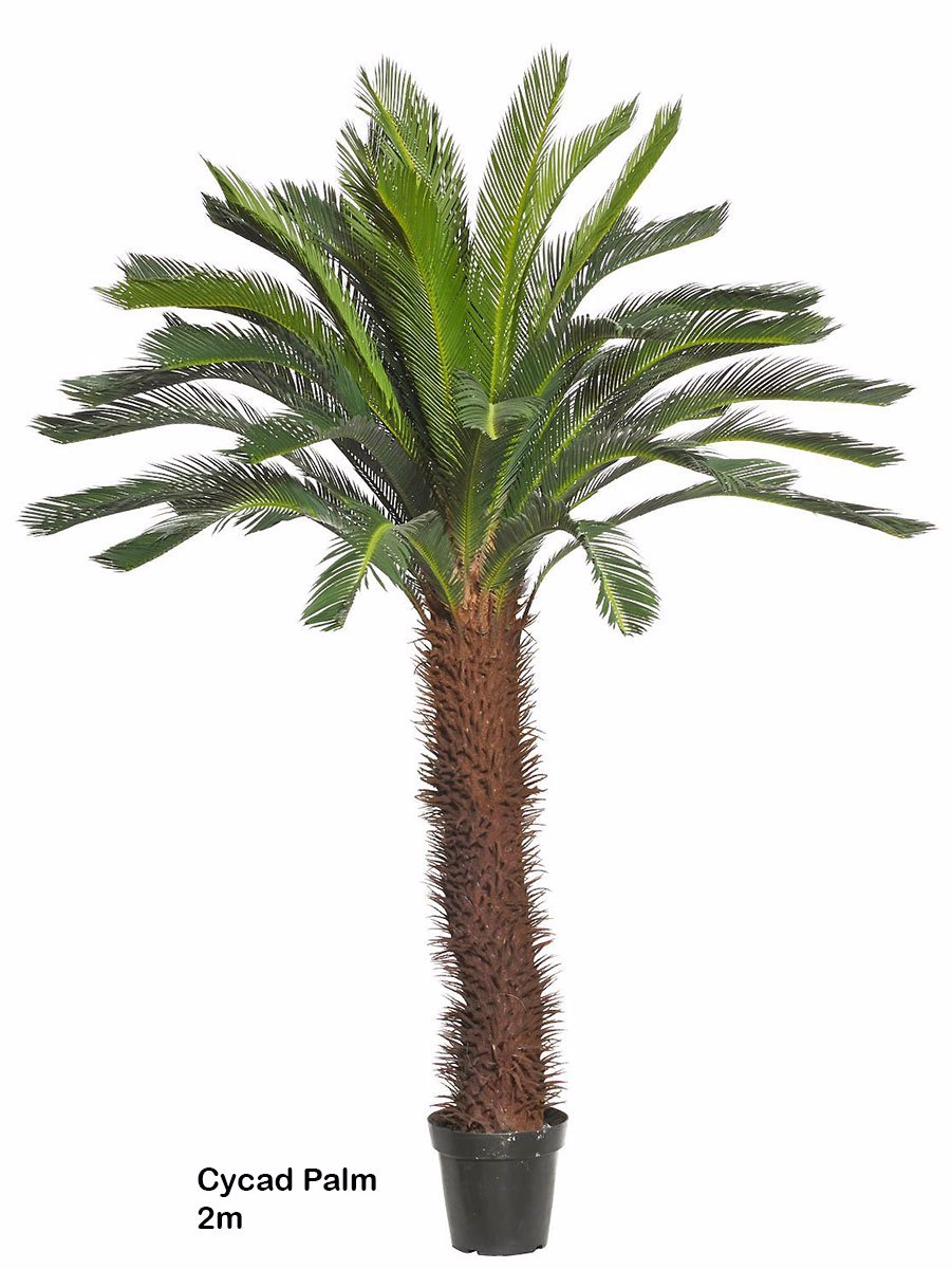 Articial Plants - Cycad Palm 2m