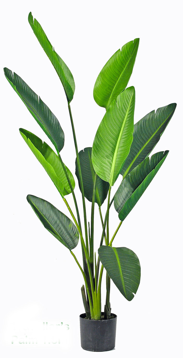 Articial Plants - Heliconia Palms- 1.6m