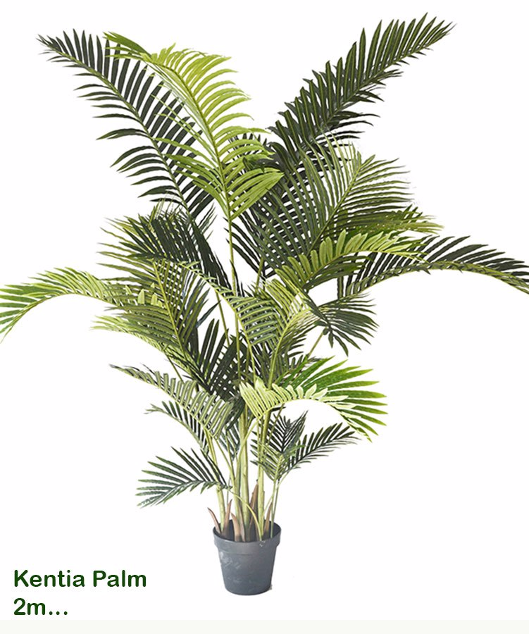 Articial Plants - Kentia Palms 2m