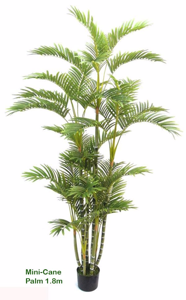 Articial Plants - Mini-Cane Palm 1.8m