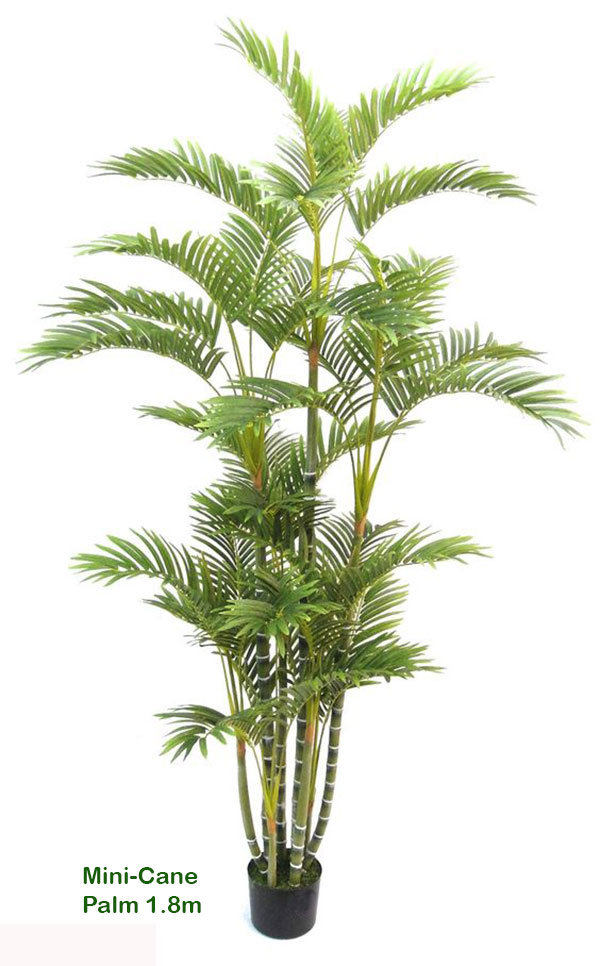 Articial Plants - Mini-Cane Palm 1.5m