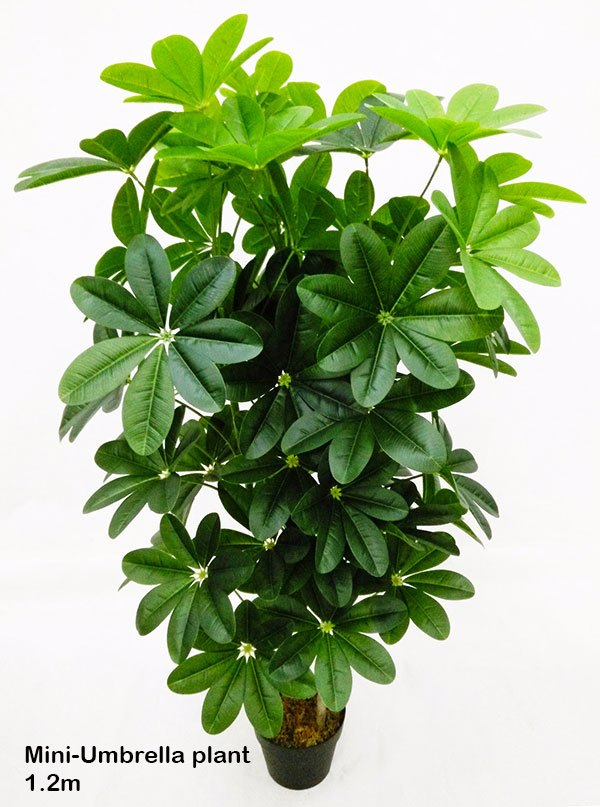 Articial Plants - Mini-Umbrella Plant 1.2m