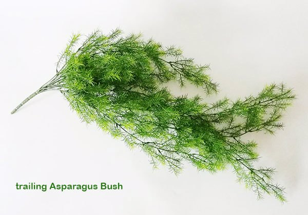Articial Plants - Asparagus Fern