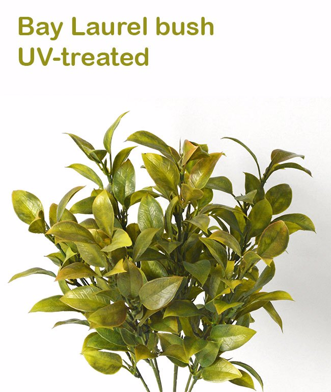 Bay Laurel Bush- UV-treated