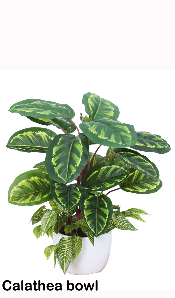 Articial Plants - Greenery Bowls- Calatheas