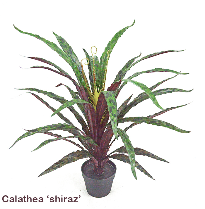 Articial Plants - Calathea 'shiraz'