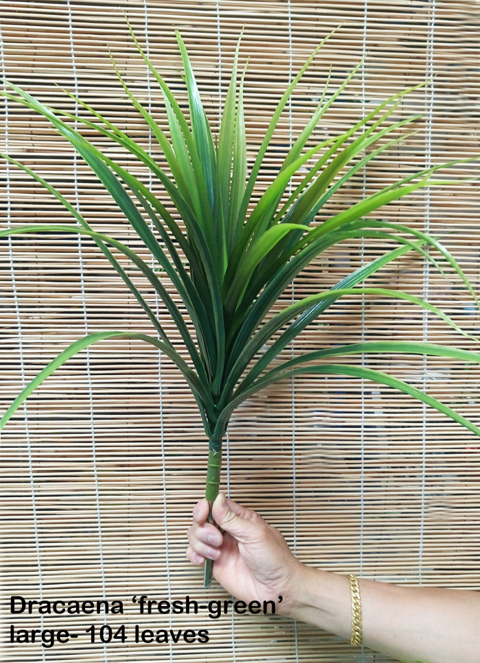 Dracaena- 'fresh-green' Plant 84 leaves