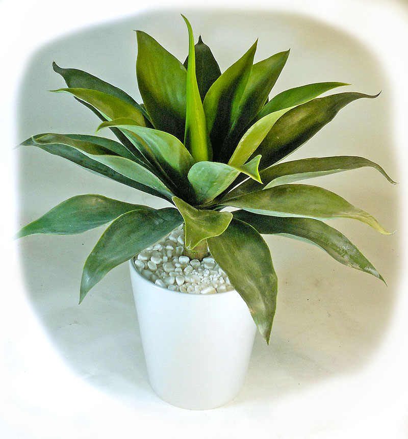 Articial Plants - Agaves [unpotted]- Medium