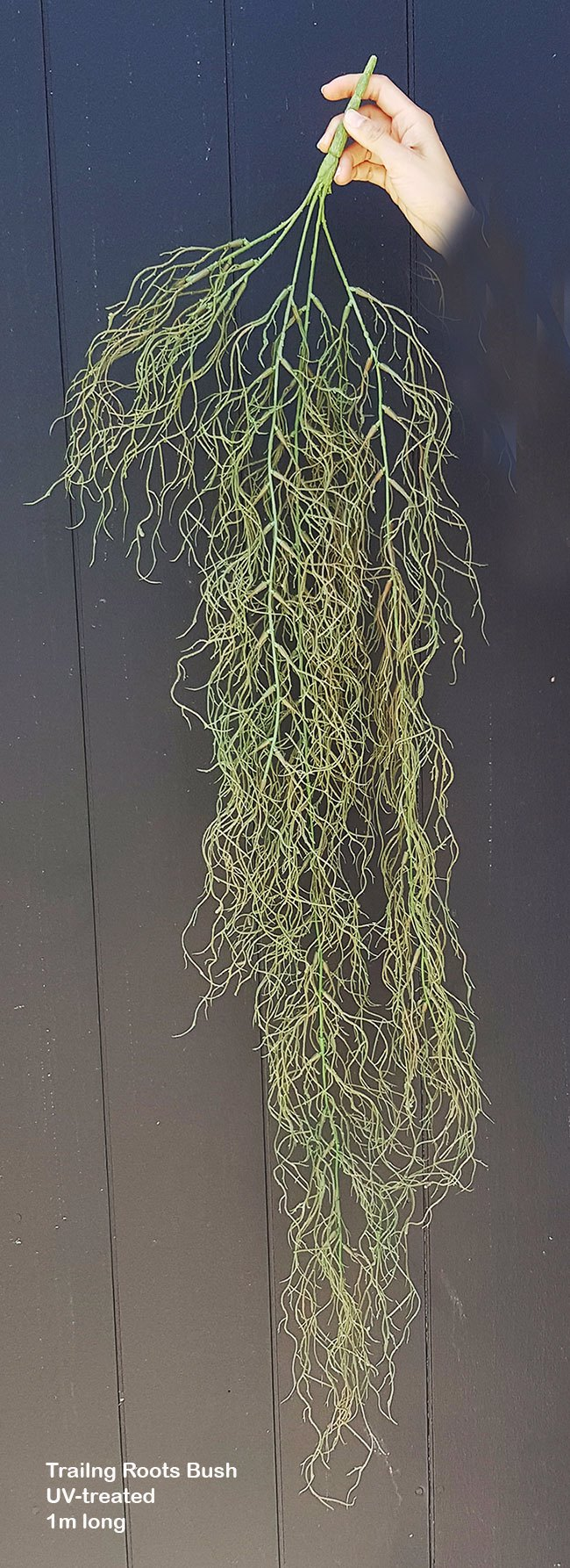 Trailing Roots Bush