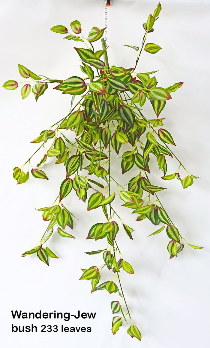 Trailing Bush- lge Wandering Jew
