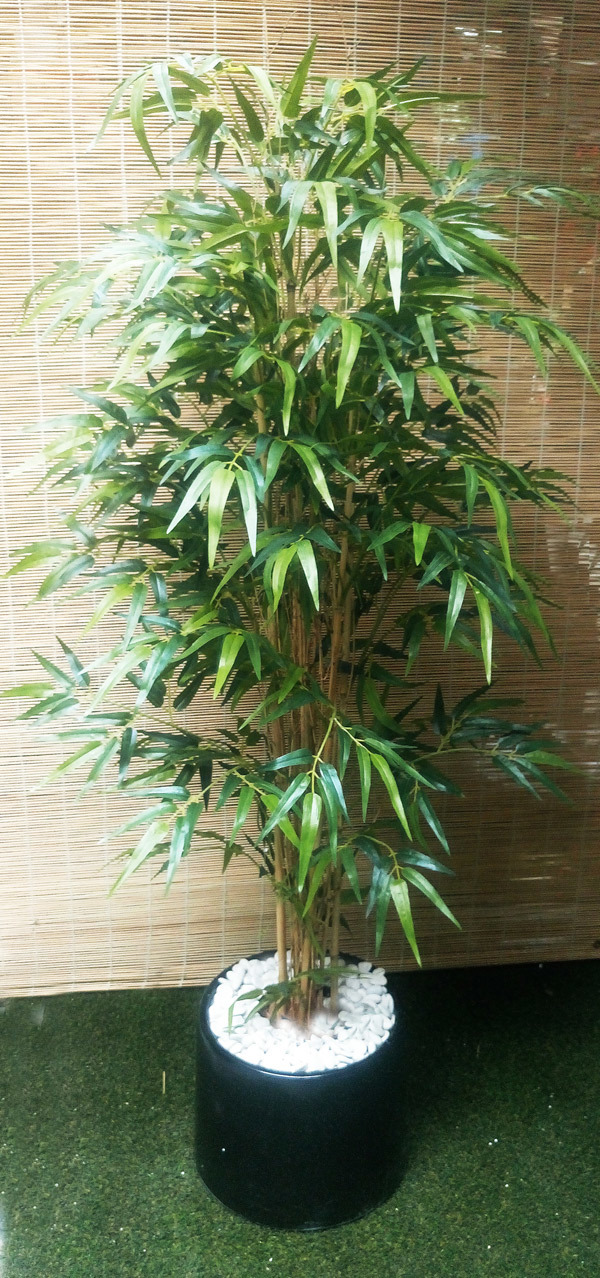 Packages- Bamboo Trees 1.3m
