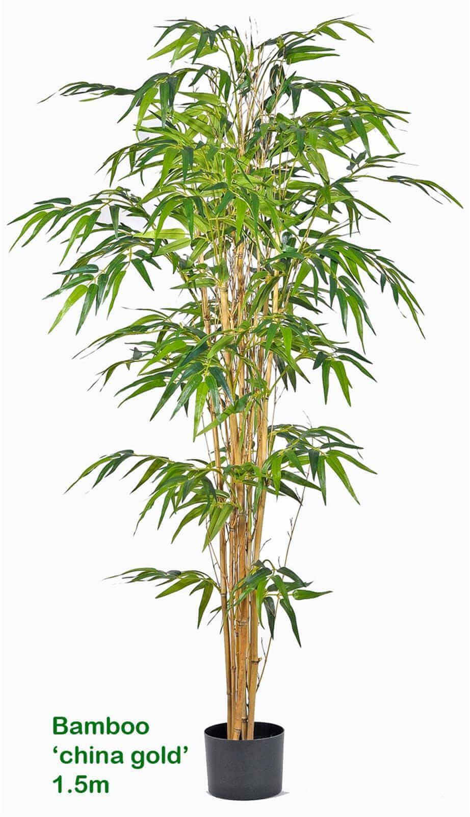 Articial Plants - Bamboo 'china gold' 2.1M