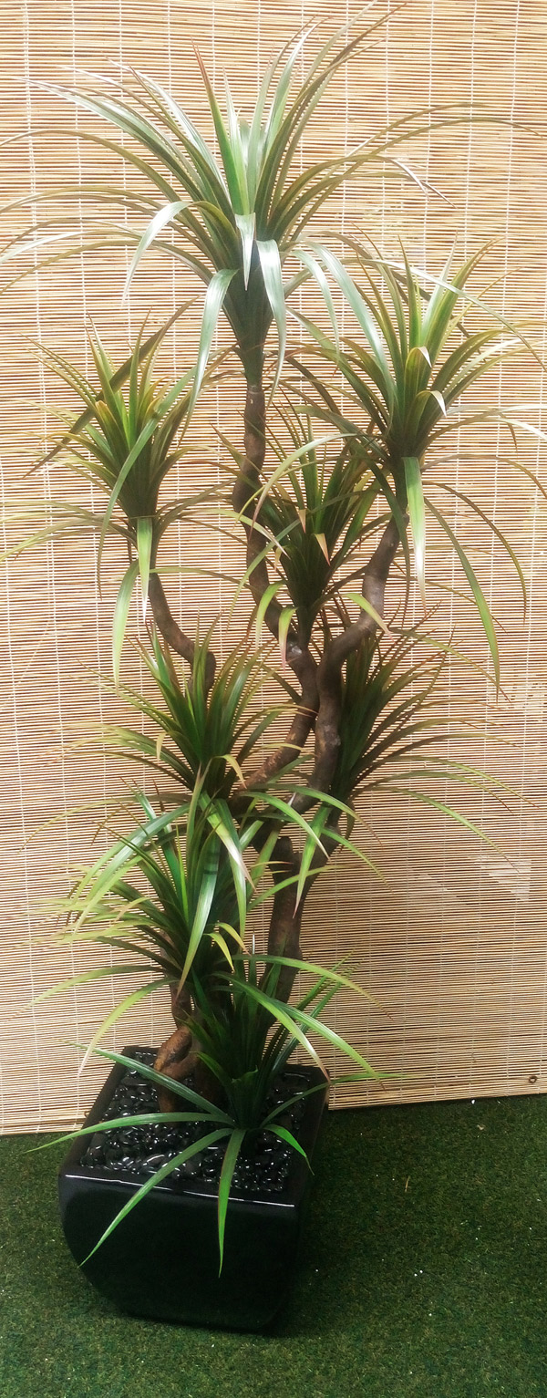 Articial Plants - Packages- Dracaenas 2.2m