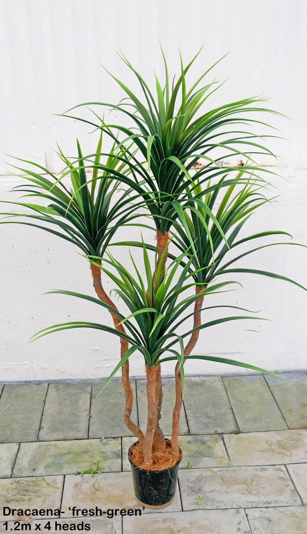 Articial Plants - Draceana- short 'fresh-green' 1.2m with 4 heads