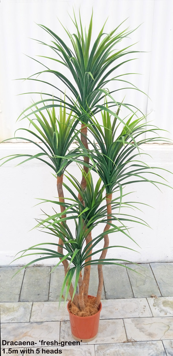 Articial Plants - Dracaena- 'fresh-green' 1.5m with 5 heads