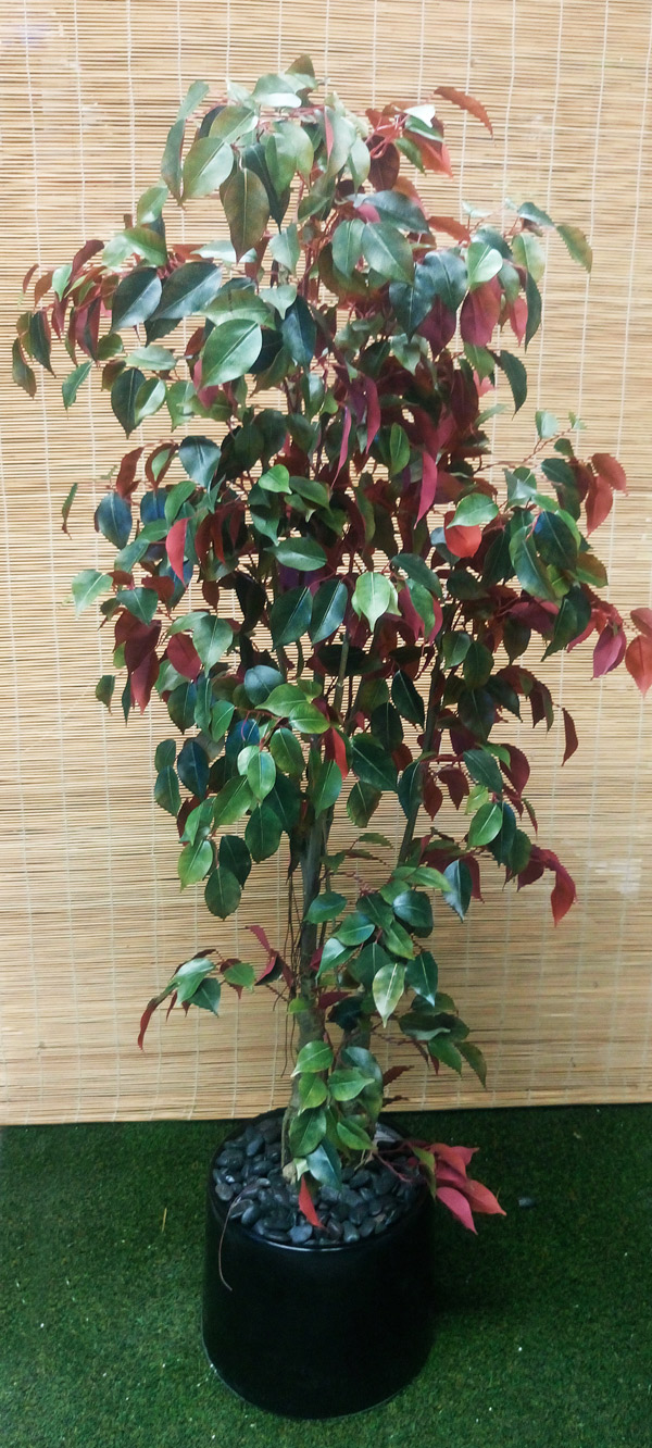 Articial Plants - Packages- Ficus [shiraz] 1.6M
