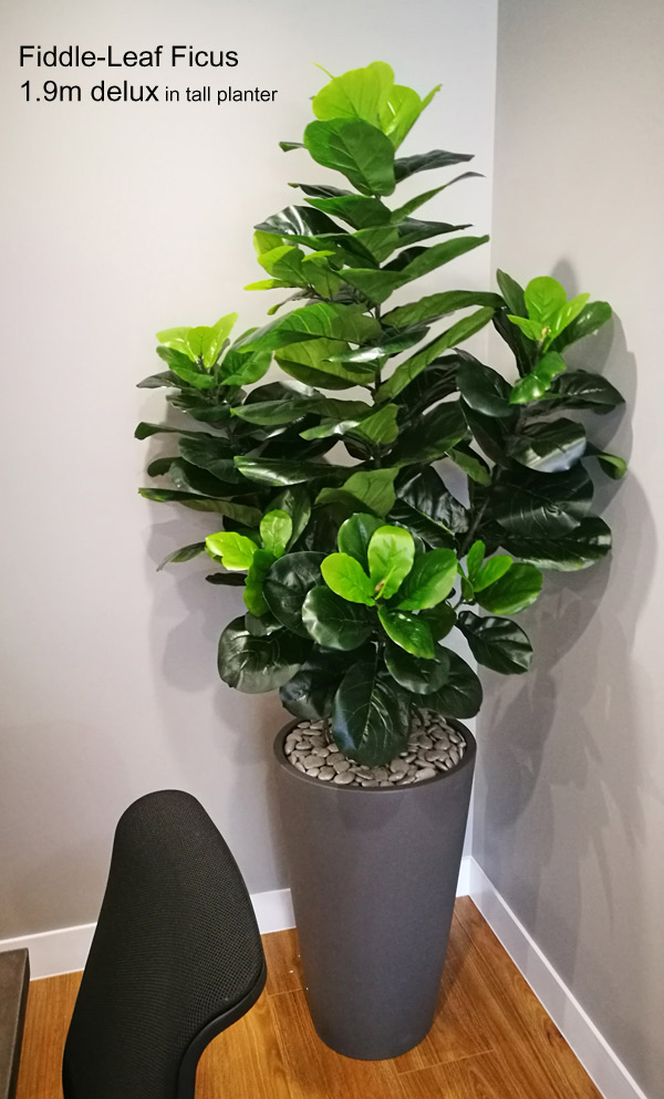 Articial Plants - Fiddle-Leaf Ficus 1.9m delux