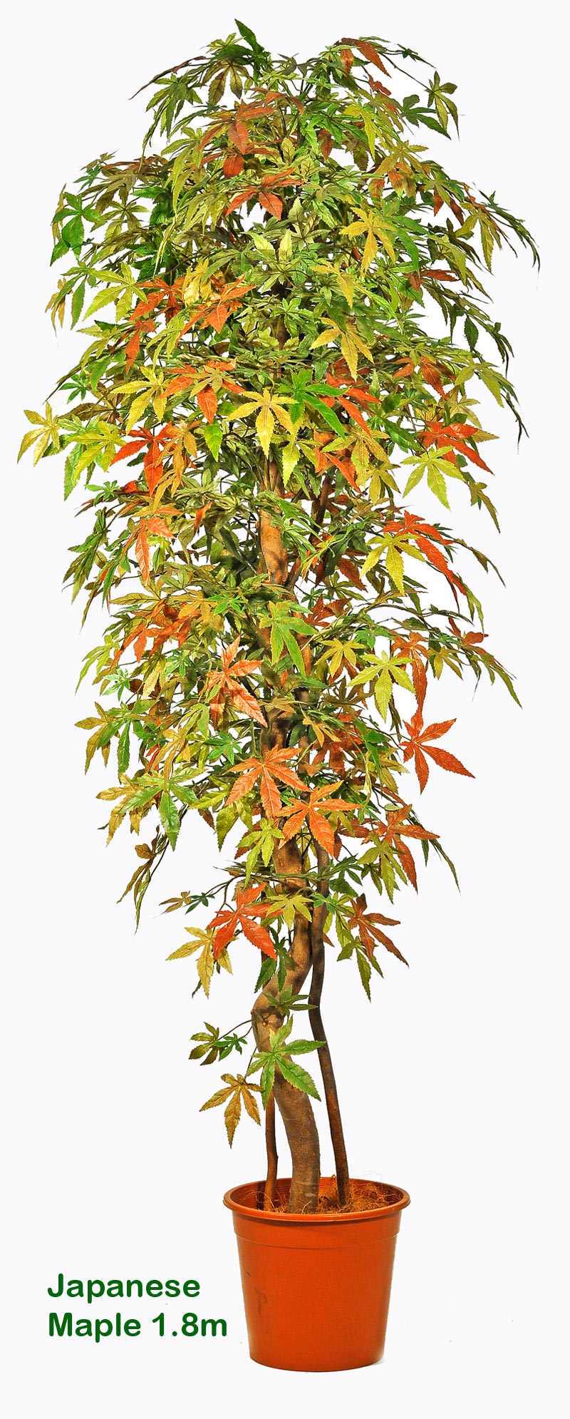 Articial Plants - Japanese Maple Trees 1.5m