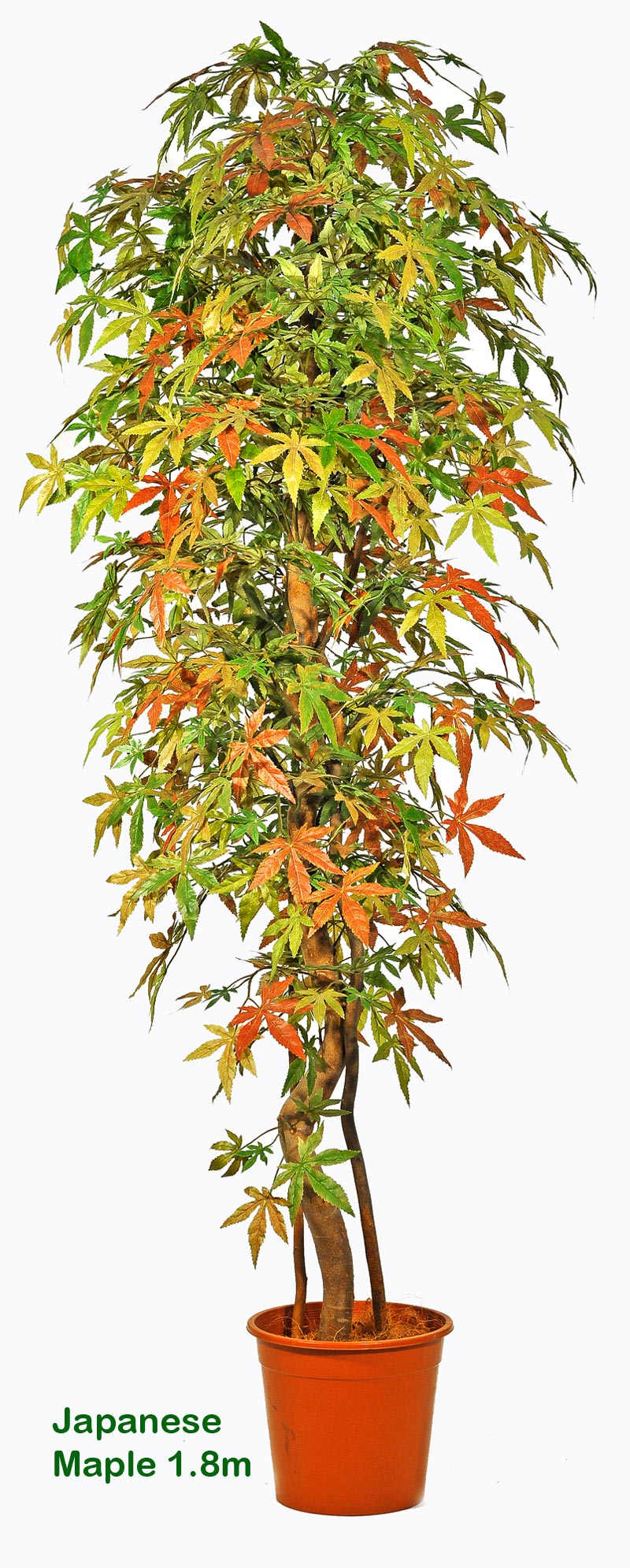 Articial Plants - Japanese Maple Trees 1.8M