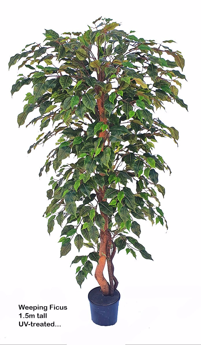 Articial Plants - Weeping Ficus 1.8m UV-rated