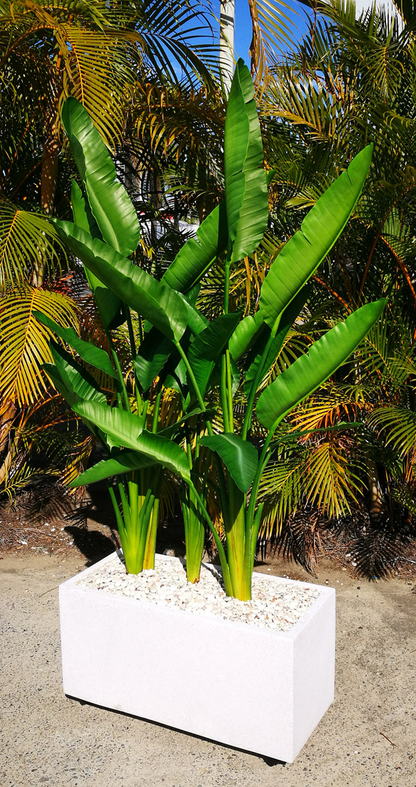 Articial Plants - Trough Planters- with Traveller's Palms 2m tall