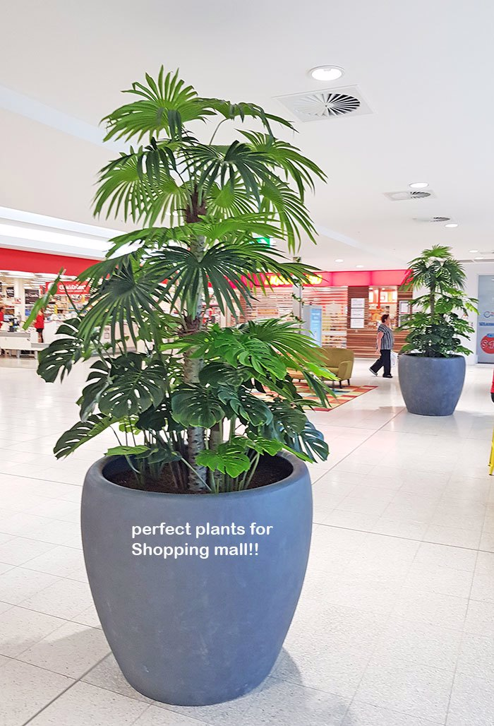 Large Palm Planters, perfect for Shopping Malls...