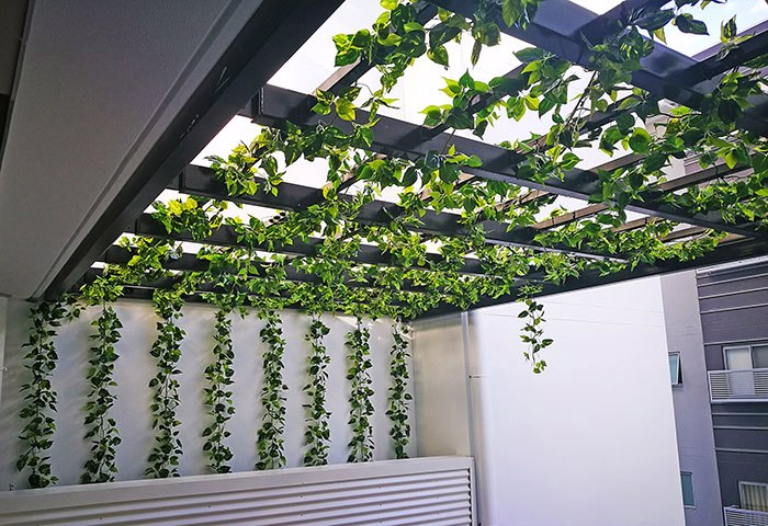 Vines over pergola for instant coverage...