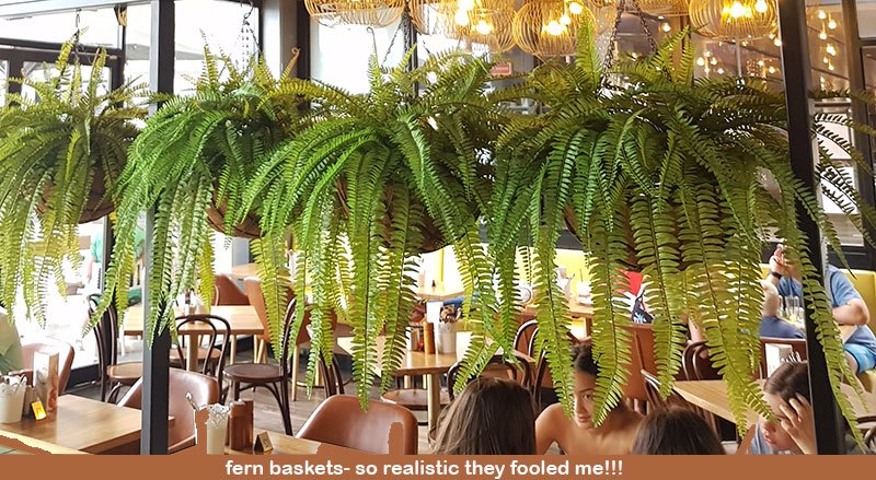 Hanging Fern Baskets in cool Cafe