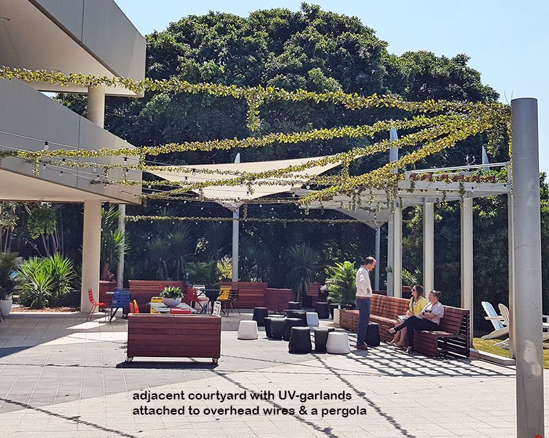 Full-Sun artificial Vines in exposed office complex courtyard...